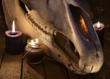 Close up with evil horse skull and two black candles. Mystic still life with scary occult objects, horror Halloween and black magick concept royalty free stock photography