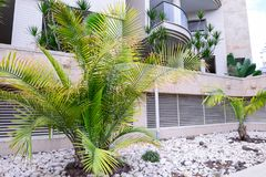 Close up Exotic Landscaping Design with palms in modern architecture building complex. Selective focus. Space for text. stock photos