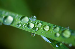 Close-up exotic plant leaf with water drops , Beautiful green grasses texture with drops of water Stock Photography