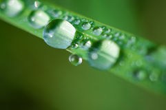 Close-up exotic plant leaf with water drops , Beautiful green grasses texture with drops of water Royalty Free Stock Photo