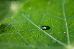 Close-up exotic plant leaf with water drops , Beautiful green leaf texture with drops of water Stock Photo