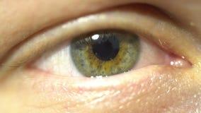 Close-up extremo do olho verde da íris e do aluno que dilatam-se e que contratam Muito finamente anatomia humana detalhada, pisca imagem de stock royalty free