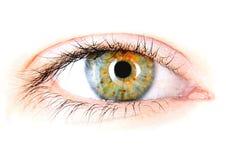 Close up of eye Stock Image