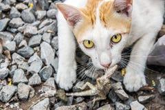 Close up eye of catch predator Stock Photo