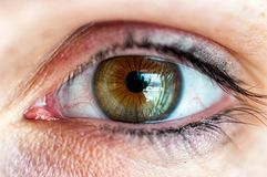 Close up of an eye royalty free stock photos