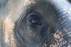 Close up The eye of elephant royalty free stock photography