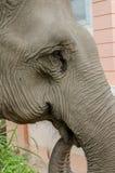Close up of eye elephant at elephants camp,Thailand. Elephant  at elephants camp Ruammit Karen village,Chiang Rai Royalty Free Stock Photo