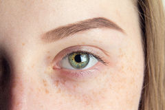 Close up eye and eyebrow Stock Images