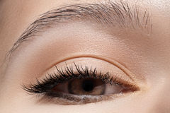 Close-up eye with fashion light make-up, long eyelashes royalty free stock photos