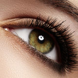 Close-up eye with fashion light natural make-up, extra long and volume eyelashes Royalty Free Stock Photography
