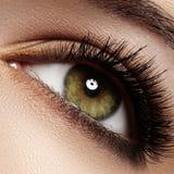 Close-up eye with fashion light natural make-up, extra long and volume eyelashes royalty free stock photography
