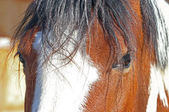 Close up of the eye of a horse Stock Images