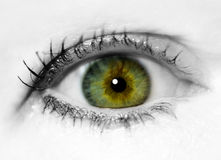 Close Up Eye Stock Photography
