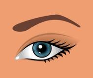 Close up eye isolated. Illustration close up eye isolated - vector Stock Photo