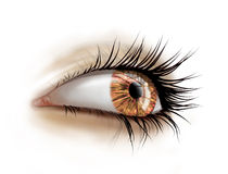 Close up of eye with long lashes Stock Photo