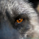 Close up eyes animal Royalty Free Stock Images
