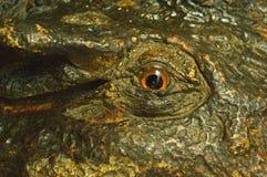 Eyes crocodile stucco stock photos