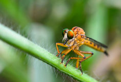 Close up eyes dragonfly Stock Photo