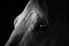 Eyes of a horse royalty free stock photos