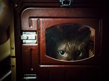 Free Close Up Eyes Of Cat Hide And Seek In The Red Box Royalty Free Stock Images - 185109309