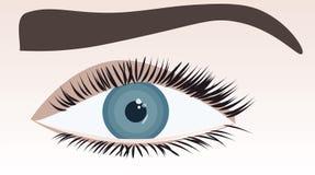 Close-up fêmea do olho humano Ilustração do Vetor