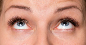 Face woman with eyes and eyelashes Royalty Free Stock Photo