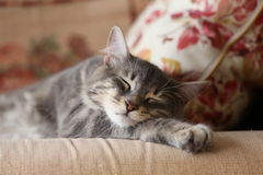 lovely cat sleeping on sofa Royalty Free Stock Photo