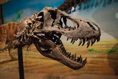 Close up face dinosaur Royalty Free Stock Photo
