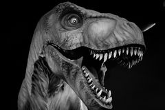 Close up face dinosaur royalty free stock photography