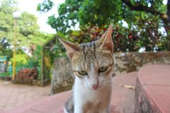 Close up of face of little and cute cat royalty free stock images