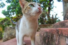 Close up of face of little and cute cat royalty free stock photography