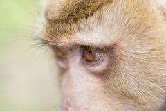 Close up face monkey Stock Images