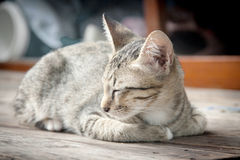 Close up face of stray cat as sleep Royalty Free Stock Images