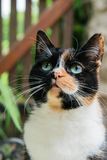 Close up of the face of a tortoiseshell cat Stock Images