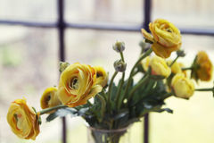 Close up of fake yellow flowers horizontal Royalty Free Stock Photo