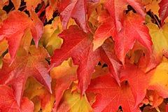 Close up of fall foliage Stock Image