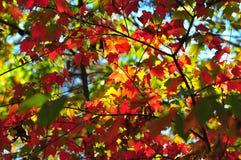 Fall Foliage Autumn Leaves Close Up Background stock photos