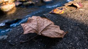 Close up of fall leaf. Close up of a leaf in Autumn with water in background royalty free stock image