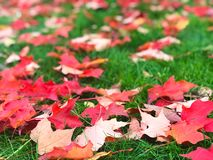 Close up Fall leaves on grass stock photography