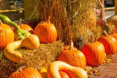 Close Up of Fall Pumpkin Display with Straw Bales Stock Photos