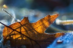 Close up of fallen leaf with rime. Beautiful autumnal or winter background Royalty Free Stock Photography