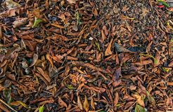 Close up of fallen leaves stock images