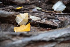 Close up of fallen tree trunk with leaves royalty free stock photos