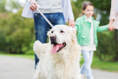 Close up of family with labrador dog in park Royalty Free Stock Photos