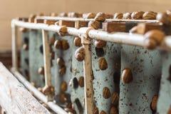 Close up. Farm inside. Snails are crawling around the enclosure