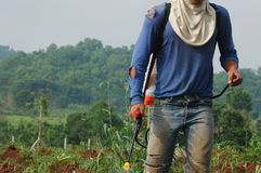 close-up farmer spraying pesticide in the cassava field, in the Royalty Free Stock Photos