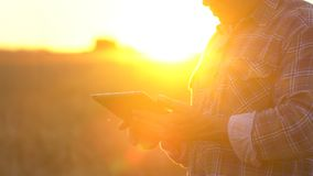 Close up farmers hands with tablet in wheat field at sunset. Modern farming, advanced technology in agriculture. Man. Farmer using tablet computer. Harvest stock video footage