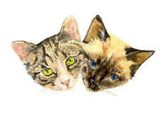 Close up fashionable portrait of two cute cats Royalty Free Stock Photography