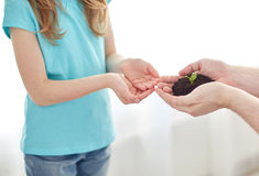 Close up of father and girl hands holding sprout Royalty Free Stock Photography