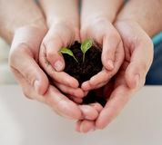 Close up of father and girl hands holding sprout. People, charity, family and ecology concept - close up of father and girl holding soil with green sprout in Stock Photography